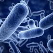 Cum să alegi un probiotic bun?